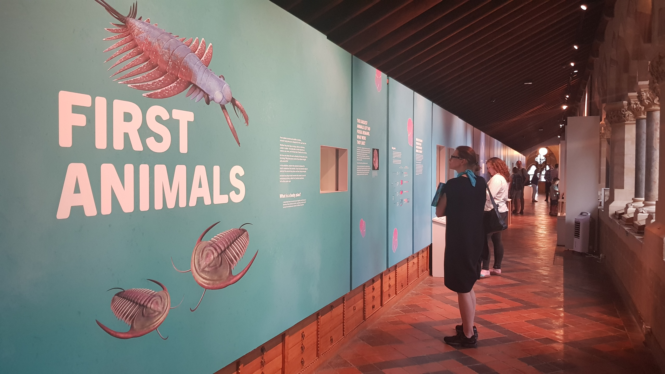 First Animals exhibition